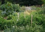 24 veggie plots