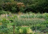 21 veggie rows
