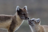 Touch noses