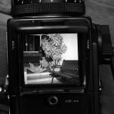 Hasselblad 501c - Parece LCD mas é o visor reflex!
