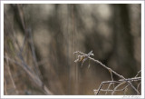 Frost (5)