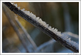Frost (7)