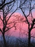 Parfait Sky.jpg