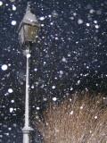 snow finally.jpg