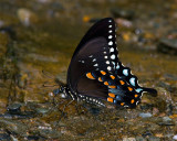 Butterfly in Cades Cove.jpg
