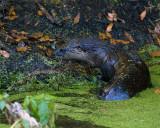 Otter on the Bank.jpg
