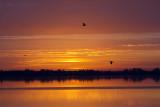 Herons at Dawn.jpg
