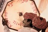Rajasthani Drummers | Jaipur, India