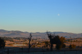 Moon over the Brindies