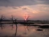 Pink Dawn 5-28-05