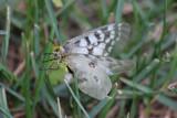 Butterflies around YNP