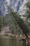 The Wintery Yosemite - 03/28/12