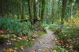 Hayward Lake Trail - October 2011