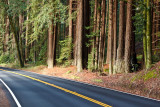 Navarro River Redwoods State Park, Mendocino