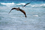 Bird chasing bird, South Beach, Miami