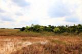 Sawgrass and Mangroves, Everglades National Park, Shark Valley, Florida