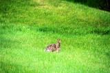 Hare, Grand Geneva Resort and Spa