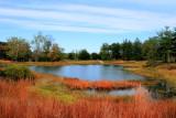 Morton Arboretum - Meadow Lake