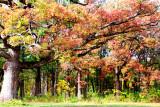Morton Arboretum - Korea Trail
