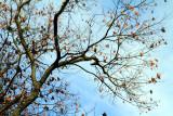 Morton Arboretum - last leaves of fall