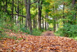 Morton Arboretum - a quiet hike