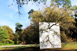 Morton Arboretum - Wall in Blue Ash Tree, Nature Unframed