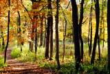 Morton Arboretum - another quiet hike