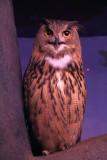 Cincinnati Zoo - Owl