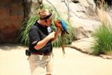 Cincinnati Zoo - Blue throated macaw