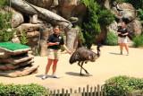 Cincinnati Zoo - Emu