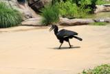 Cincinnati Zoo - Raptor