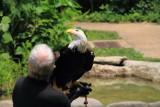 Cincinnati Zoo - Bald Eagle