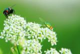 Insect life, Mt. Adams, Cincinnati, Ohio
