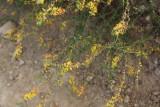 flowers_leaves_trees_plants_sticks