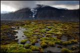 High altitude vegetation near Advetfjorden - Svalbard