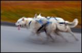 Sledgedog traing at Svalbard