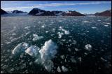 Ice in Liefdefjorden