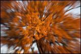 Autum Oak at Ekenäs