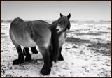 Workhorses De Biebosch - Holland