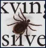 Tick (fästing) - my co-reader in a book about butterflies