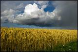 Heavy clouds over Pilekulla - Öland