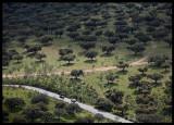 The road into Parc Natural de Monfrague