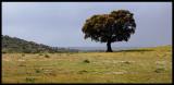 Tree close to Portugise border