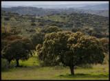 Extremadura landscape - close to portugise border
