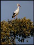 The nest tree