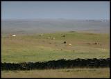The huge plain south of Alcántara