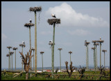 The White stork suburbs - west entrance of Cáceres