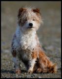 El perro......a curious little dog - Spain