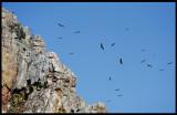 Vultures at Monfrague