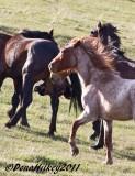 7studs-1421-28April2011-Piceance-web.jpg